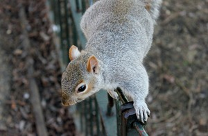 squirrel short attention span looking for something